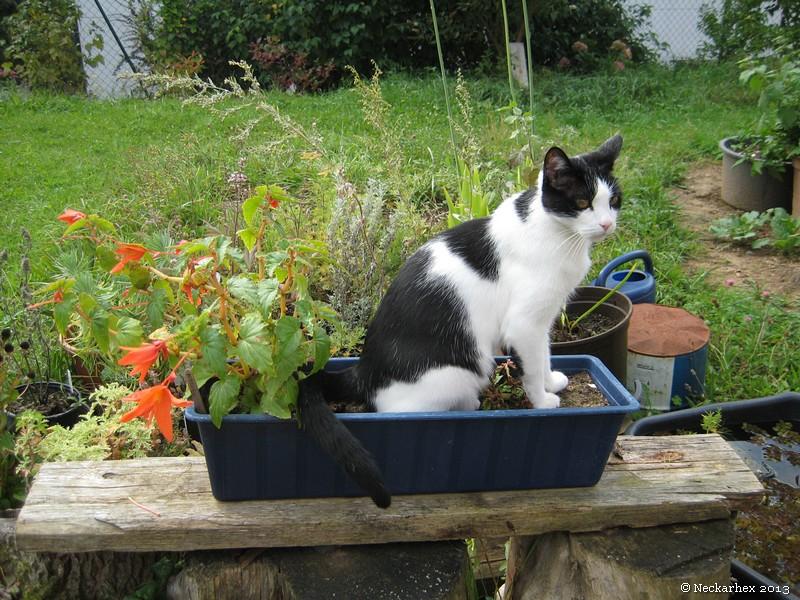 Kater Pitou sitzt im Blumenkasten