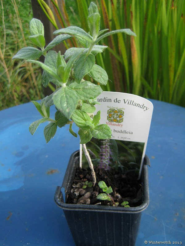 a small mint plant growing in a pot